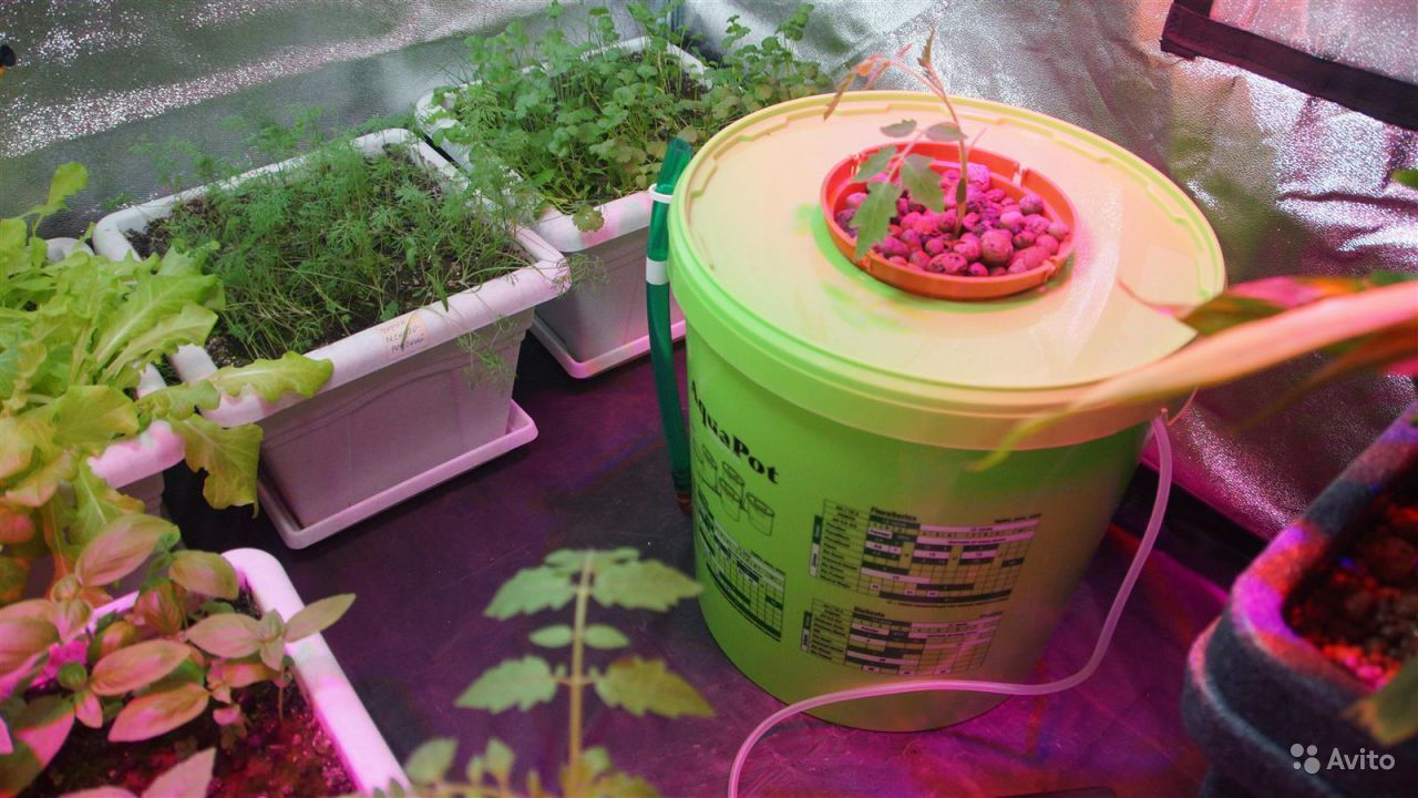 Как выращивать гидропон в домашних условиях 555