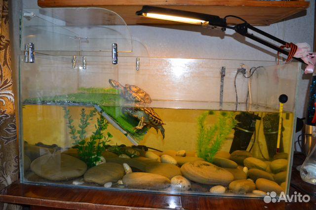 Обустраиваем аквариум для красноухой черепахи своими руками