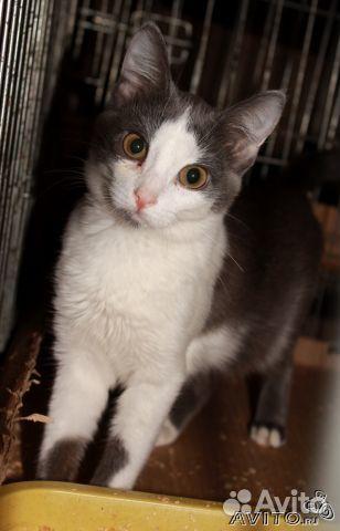 Котята, 3-4 мес, мальчик и девочка, даром
