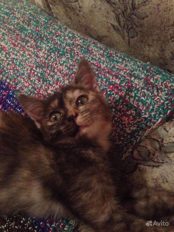 Котёнок в добрые руки - фотография № 1
