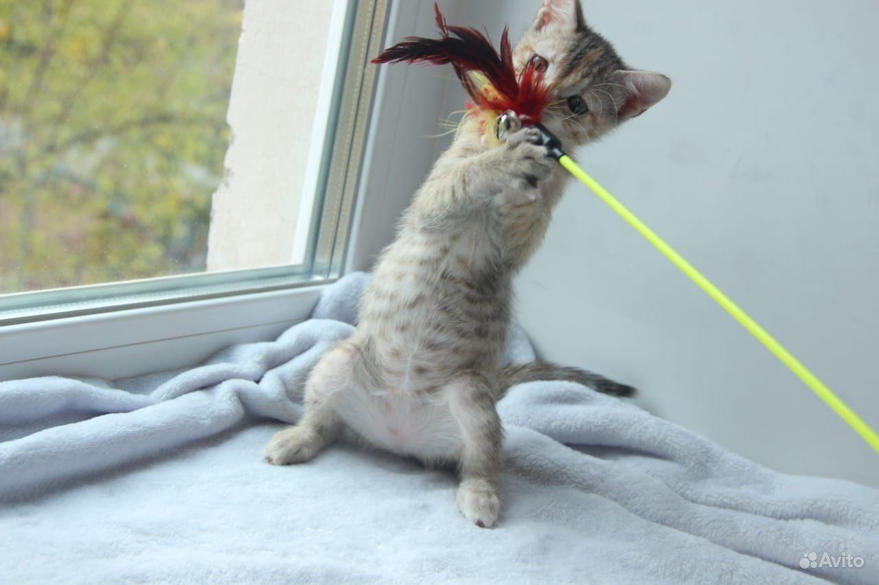 Котёнок - фотография № 6