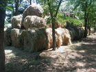 Луговой сено