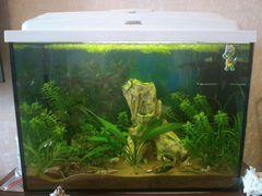 Аквариум с рыбками, креветками, грунтом и растения