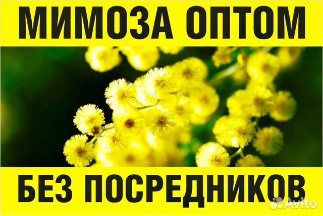 5fb511bfe47f88e Мимоза оптом | Festima.Ru - Мониторинг объявлений
