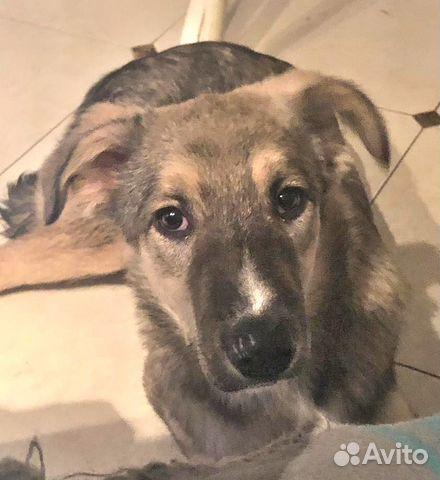 Замечательный и необыкновенный Беня - щенок в дар купить на Зозу.ру - фотография № 3