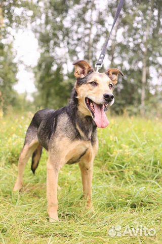 Красивейший пёс в дар в добрые руки купить на Зозу.ру - фотография № 1