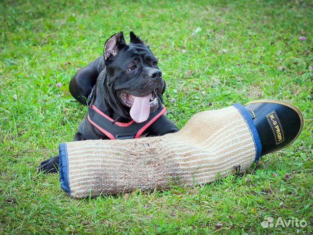 Товары для собак еврошоп