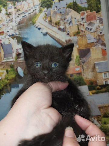 Кошка 89170821738 купить 2