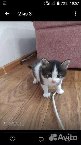 Кошка  89583990180 купить 2