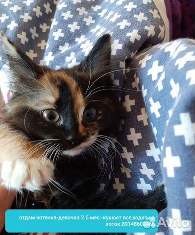Котенок 2 месяца девочка, к лотку приучена  89642393977 купить 1
