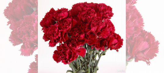 Дешево цветы оптом в челябинске, свадебные букеты для невесты из красных роз