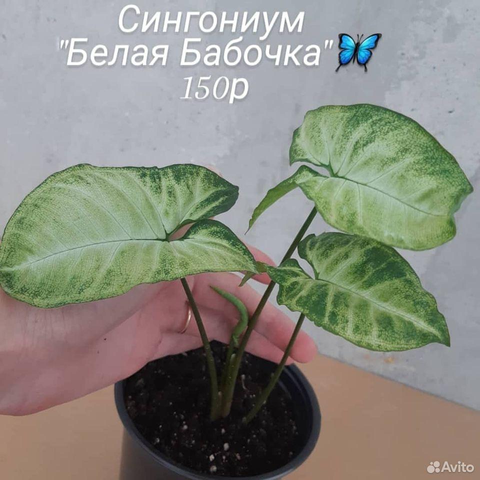 Цветы  89176088037 купить 5