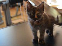 Отдам котенка в добрые руки — Кошки в Геленджике