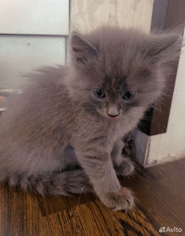 Кошка  89101089693 купить 3
