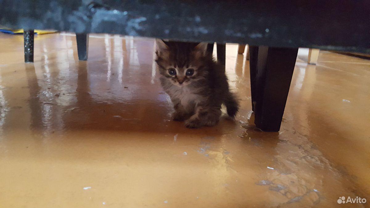 Кошка  89511720826 купить 2