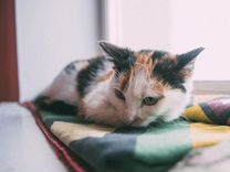 Кошечка Лиза. Девочка с непростой судьбой