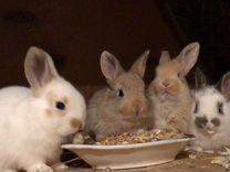 Кролики для разведения и на мясо