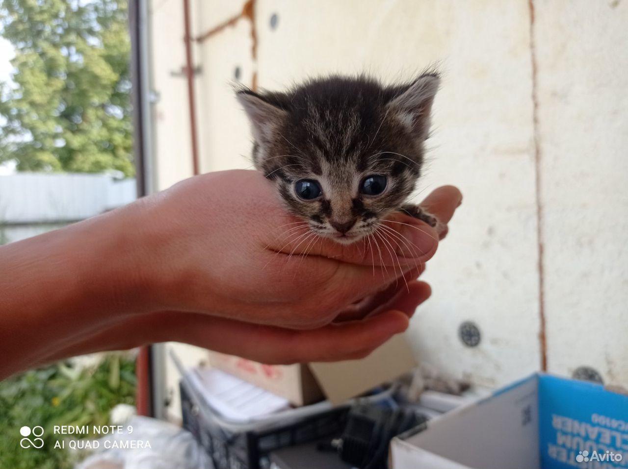 Котята в добрые руки  89055855983 купить 1