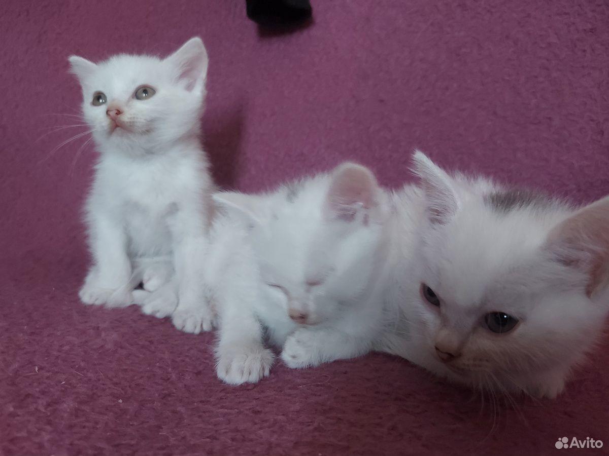 Котята  89199222029 купить 2